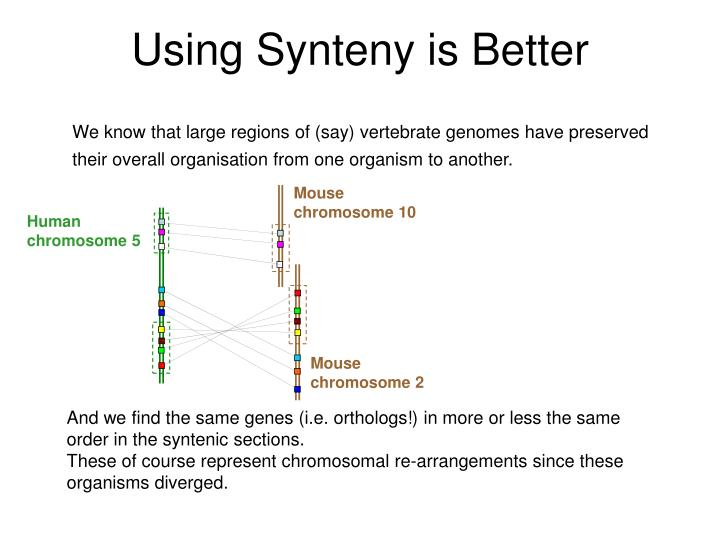 Using Synteny is Better