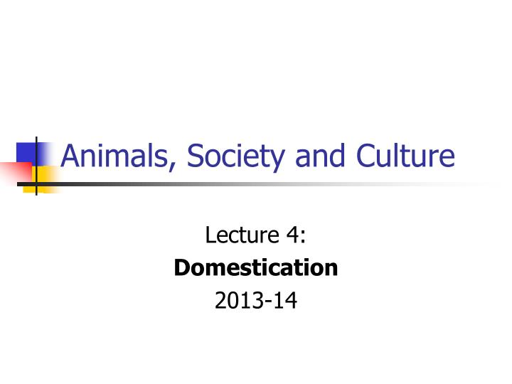 animals society and culture n.