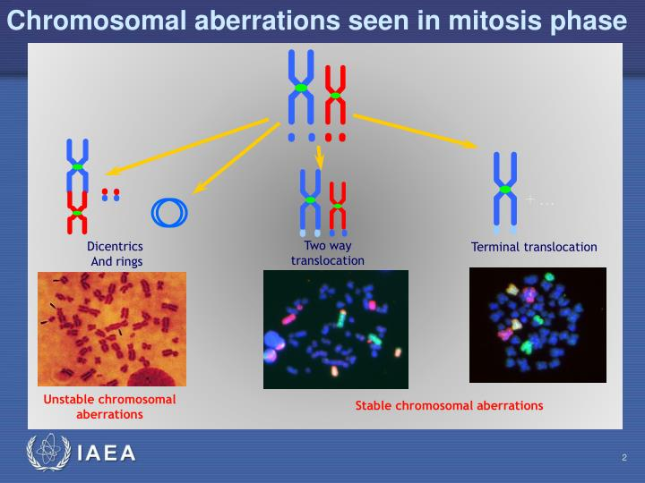Chromosomal aberrations seen in mitosis phase