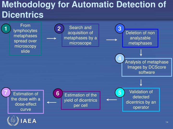 Methodology for Automatic Detection of Dicentrics