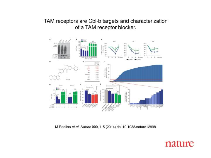 TAM receptors are Cbl-b targets and characterization