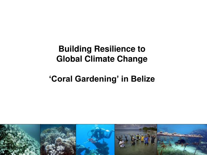 building resilience to global climate change coral gardening in belize n.