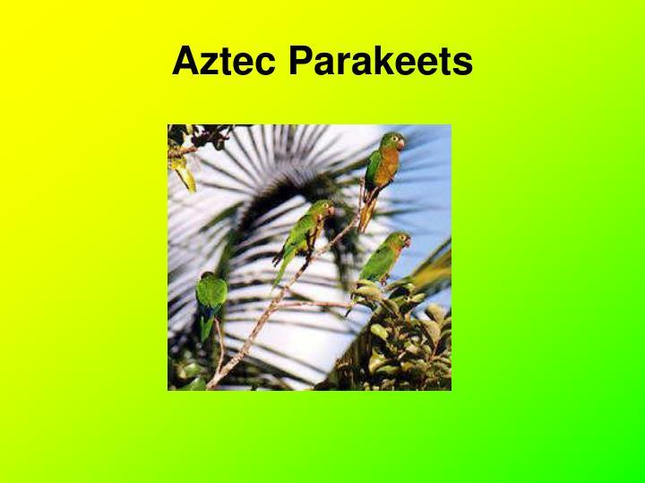 Aztec Parakeets