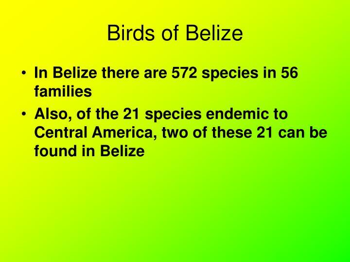 Birds of belize1