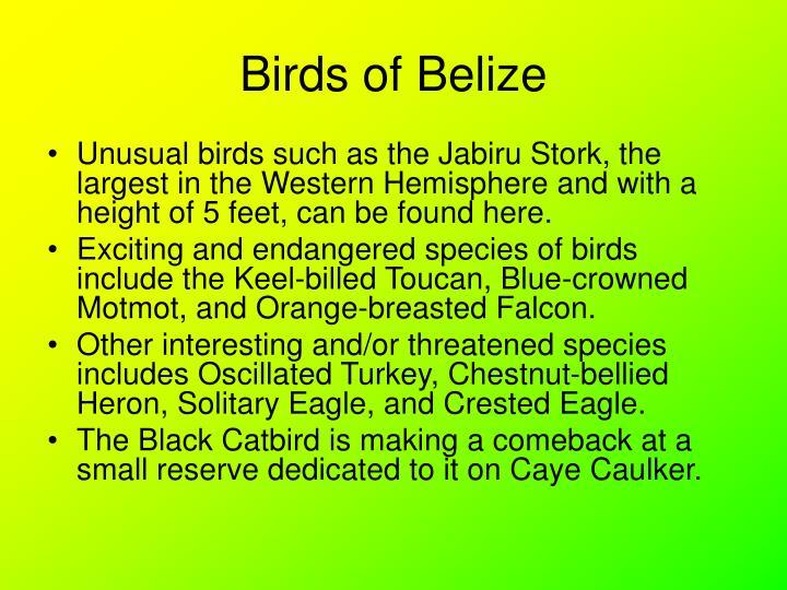 Birds of belize2