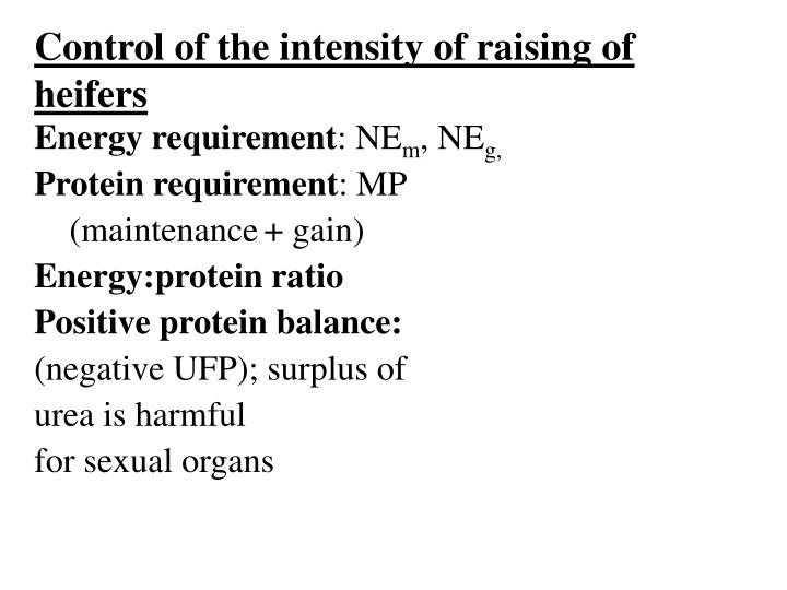 Control of the intensity of raising of heifers