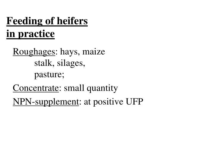 Feeding of heifers