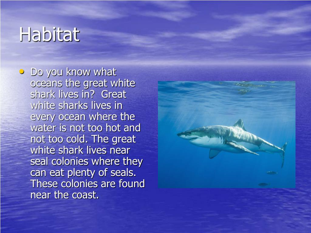 PPT - All About The Great White Shark PowerPoint ...