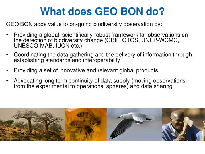 What does geo bon do