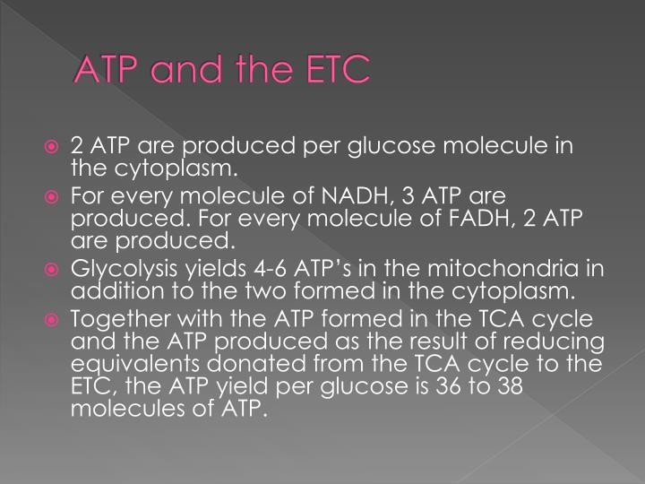 ATP and the ETC