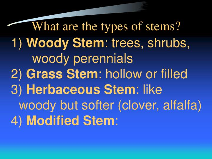 What are the types of stems?