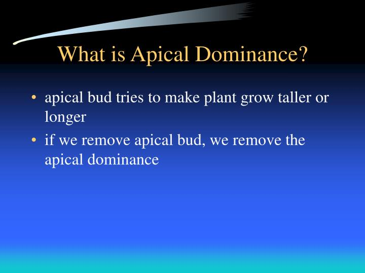 What is Apical Dominance?