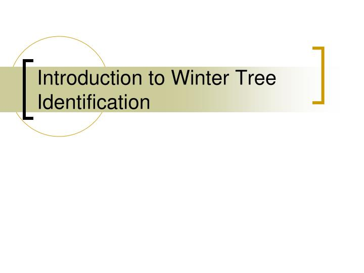 introduction to winter tree identification n.
