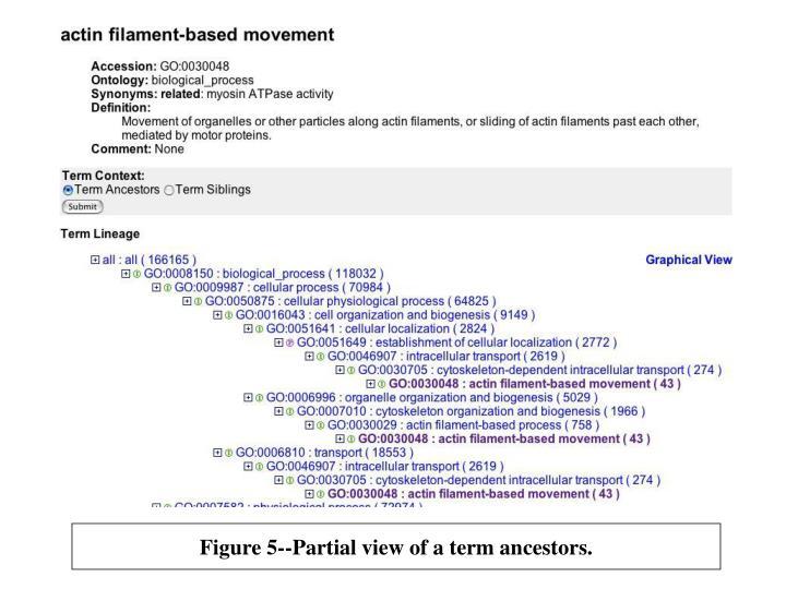 Figure 5 partial view of a term ancestors