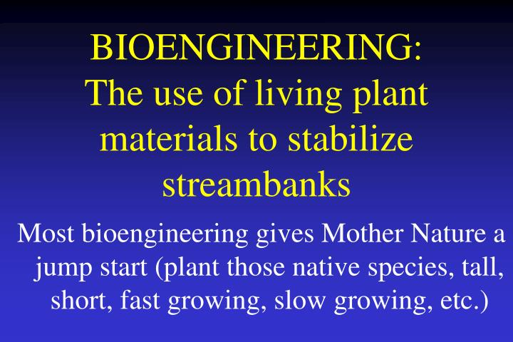Bioengineering the use of living plant materials to stabilize streambanks