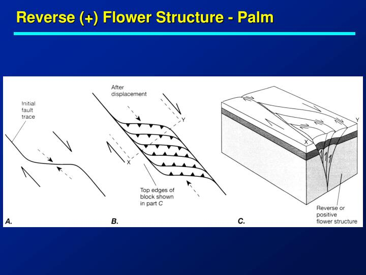 Reverse (+) Flower Structure - Palm