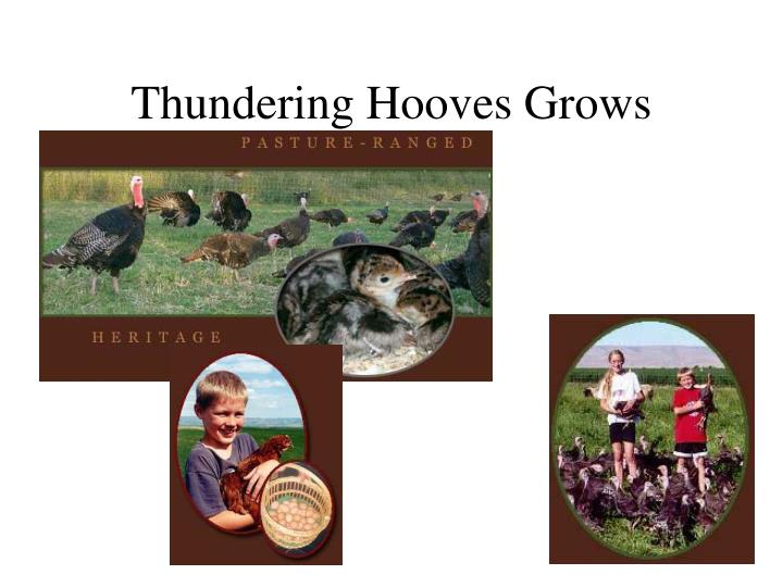 Thundering Hooves Grows