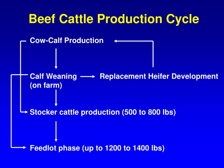 ppt making sense of grass fed beef powerpoint. Black Bedroom Furniture Sets. Home Design Ideas