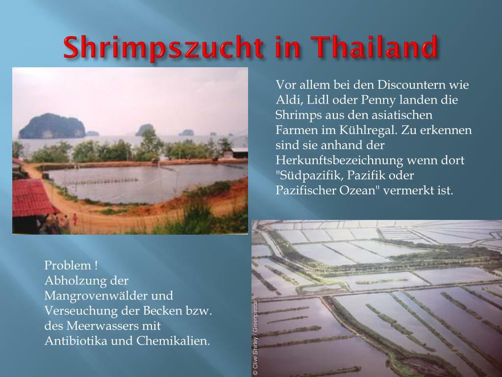 Shrimpszucht Deutschland