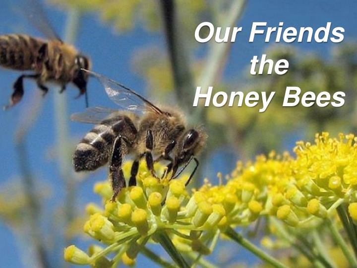 our friends the honey bees n.