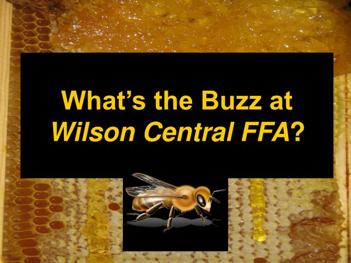 what s the buzz at wilson central ffa n.