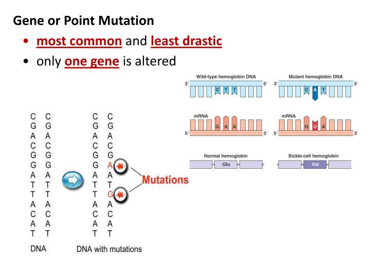 gene alteration essay