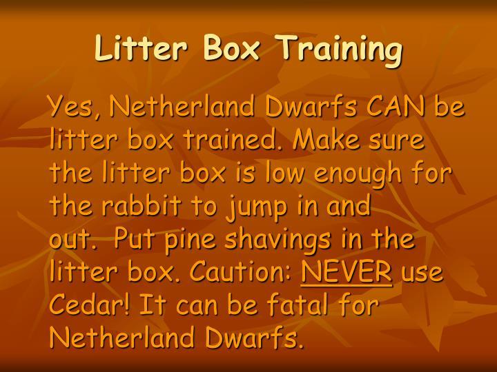 Litter Box Training