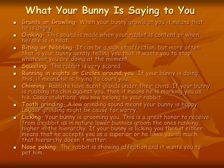 What Your Bunny Is Saying to You