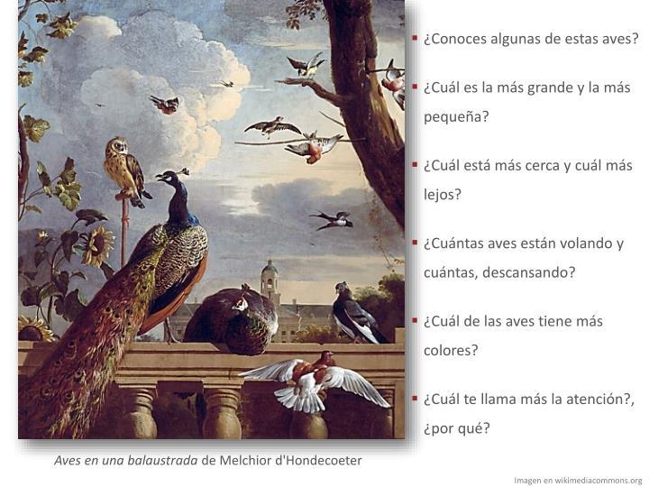 ¿Conoces algunas de estas aves?