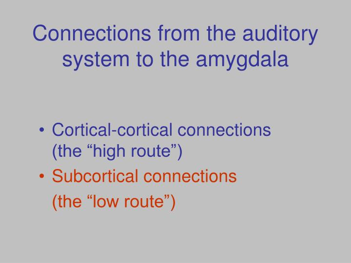 Connections from the auditory system to the amygdala