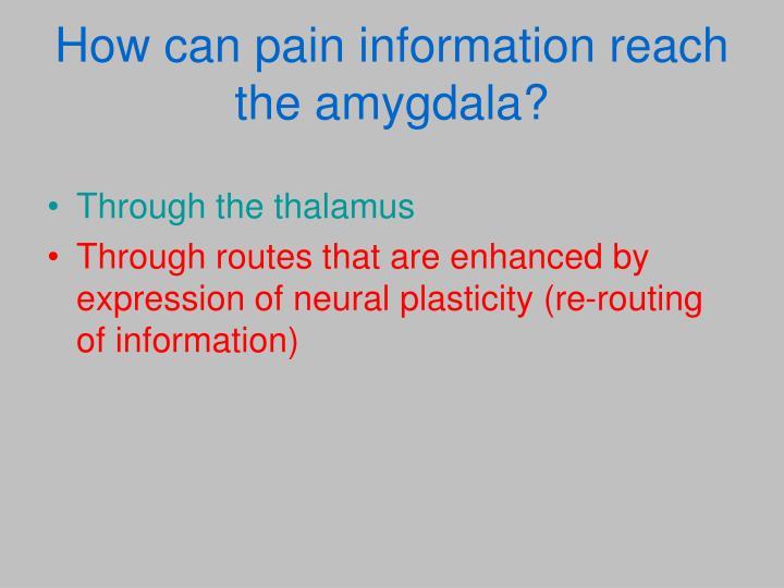 How can pain information reach the amygdala?