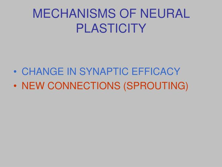 MECHANISMS OF NEURAL PLASTICITY