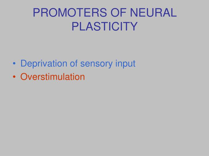 PROMOTERS OF NEURAL PLASTICITY