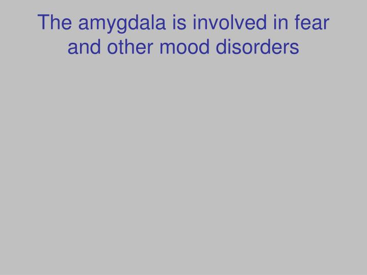 The amygdala is involved in fear and other mood disorders
