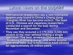 latest news on the dolphin