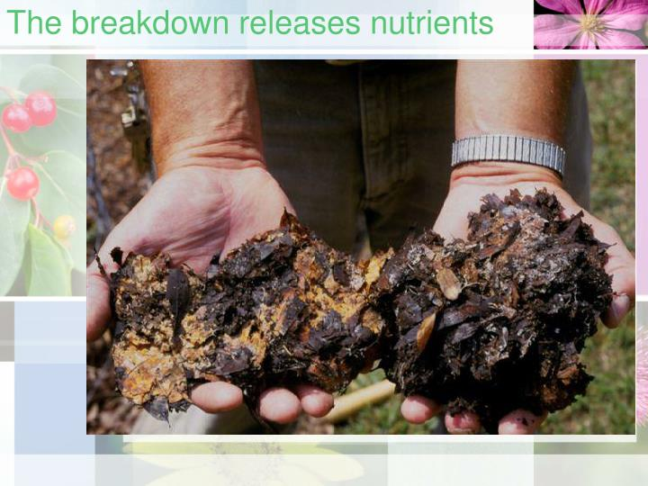 The breakdown releases nutrients