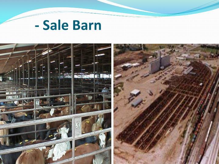 - Sale Barn