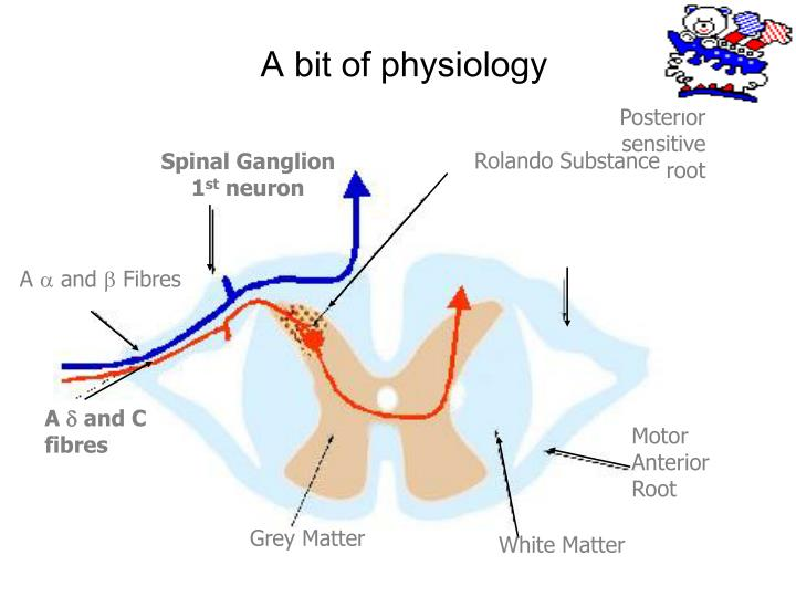 A bit of physiology