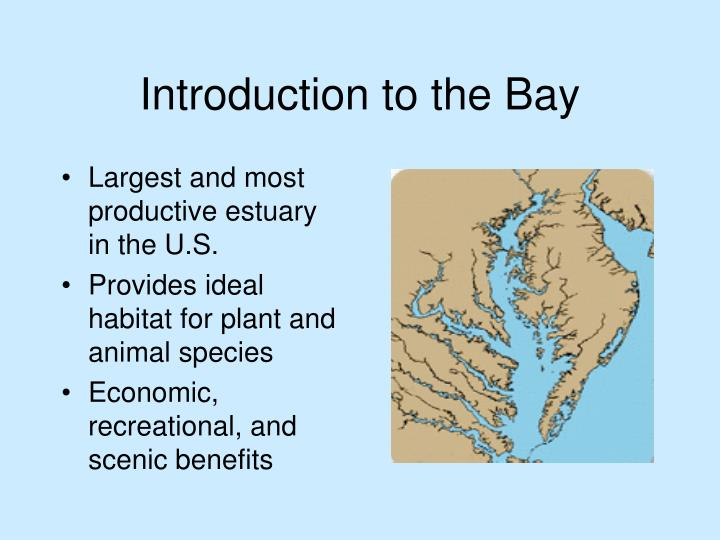 Introduction to the bay