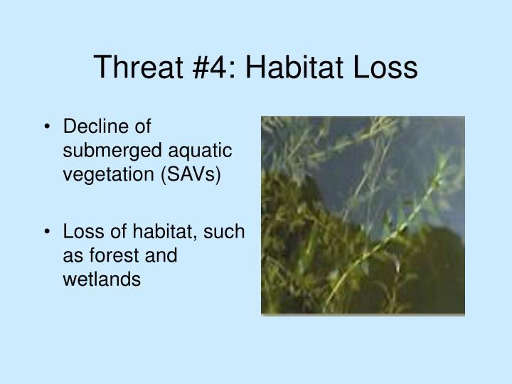 Threat #4: Habitat Loss