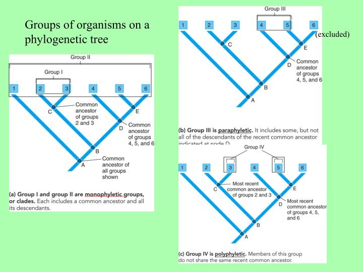 Groups of organisms on a phylogenetic tree
