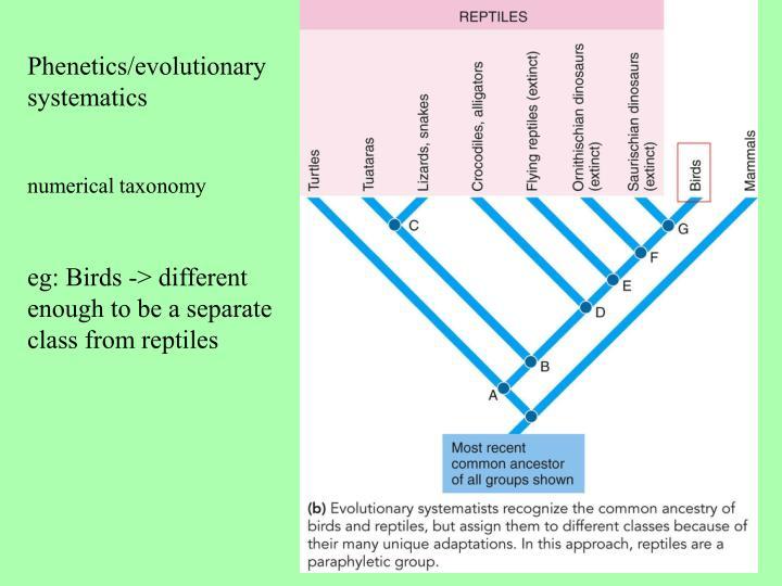 Phenetics/evolutionary systematics