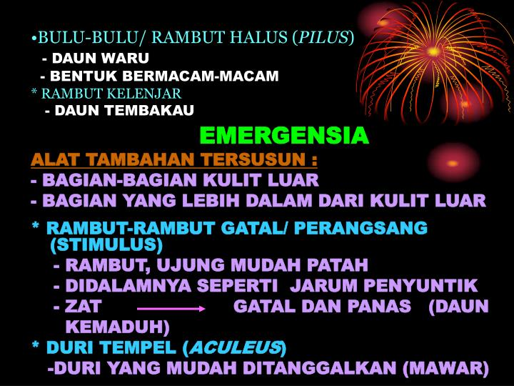 BULU-BULU/ RAMBUT HALUS (