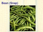 bean snap
