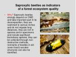 saproxylic beetles as indicators of a forest ecosystem quality