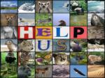 species prone to extinction2