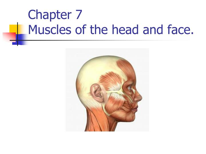 chapter 7 muscles of the head and face n.