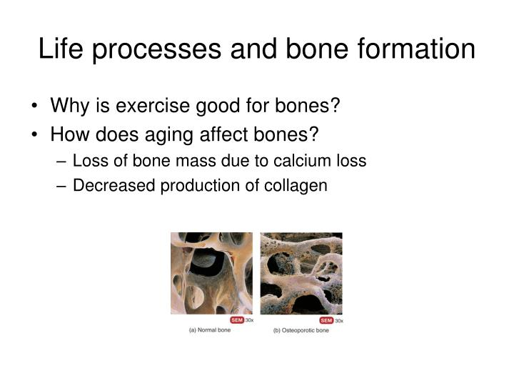 Life processes and bone formation