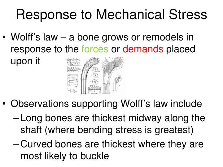 Response to Mechanical Stress