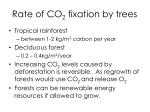 rate of co 2 fixation by trees